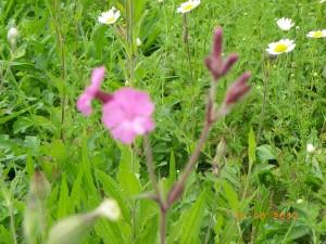 popewildflowers1208173